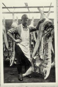 Paul Rüweling senior mit frisch geschlachtetem Schwein