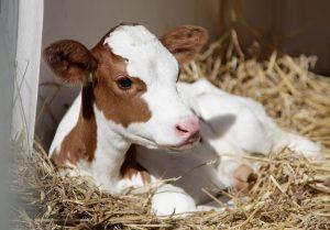 Gesunde Tiernahrung ist die beste Voraussetzung für erfolgreiche Aufzucht
