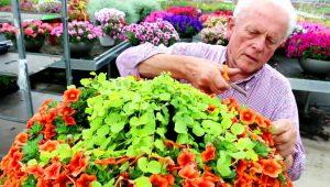 Blumenliebhaber mit Leib und Seele: der Seniorchef Heinrich Westhoff